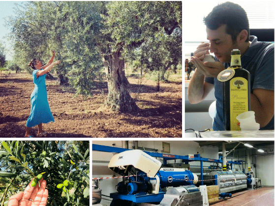 How to Pick the Best Olive Oil (7 Criteria)