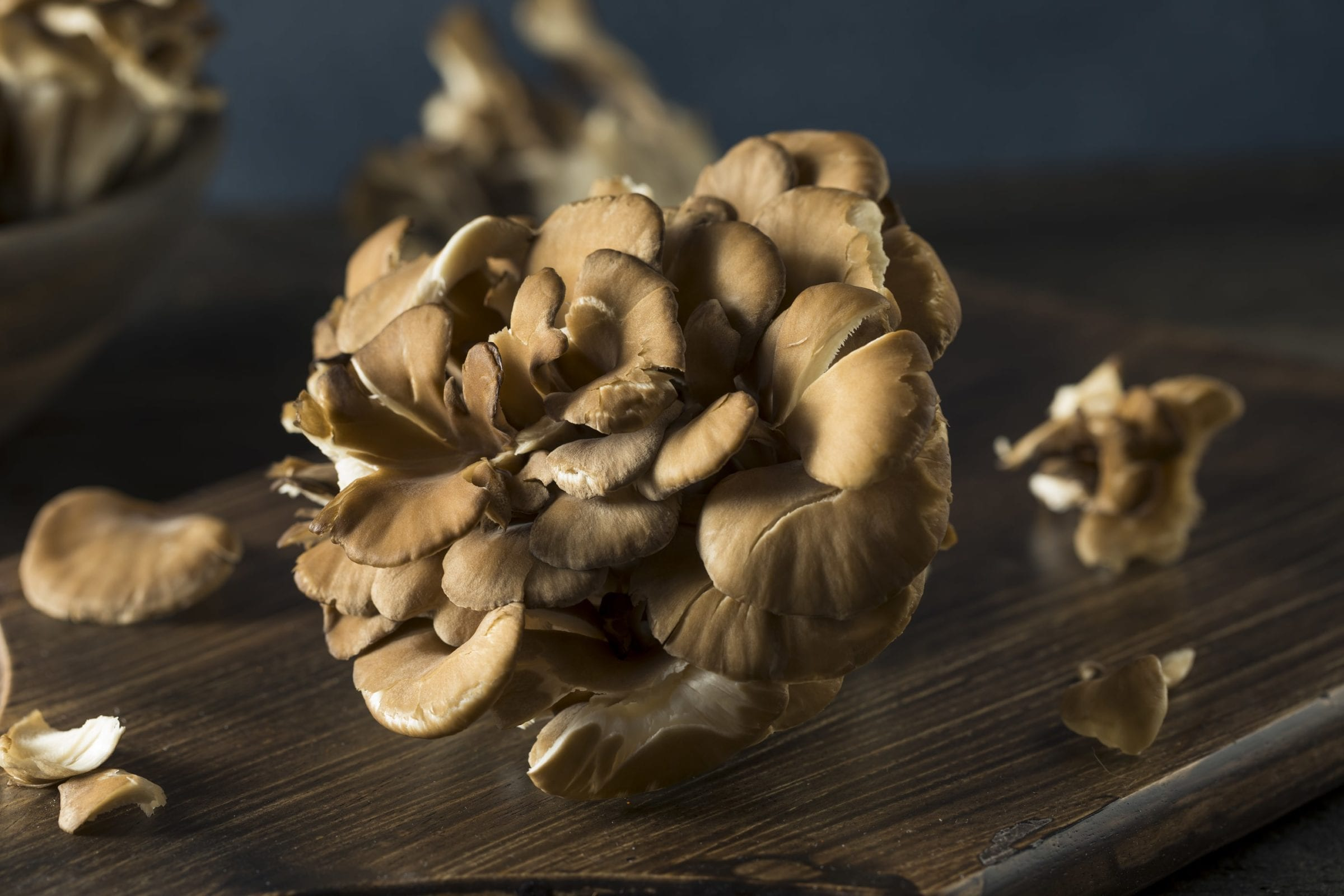 How Medicinal Mushrooms Can Help Your Immune System