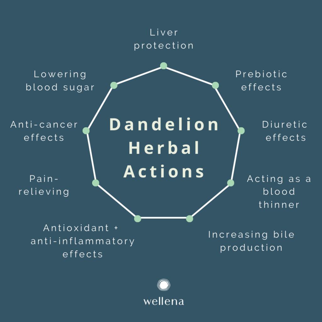 Dandelion Herbal Actions